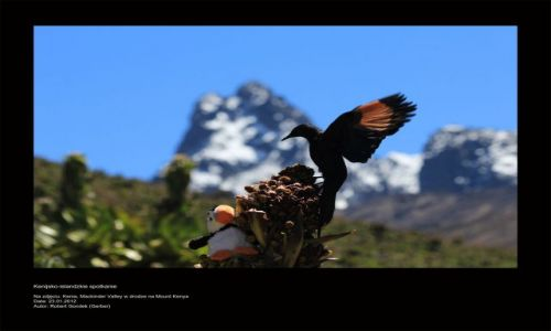 Zdjęcie KENIA / - / Mount Kenya / Kenijsko-islandzkie spotkanie