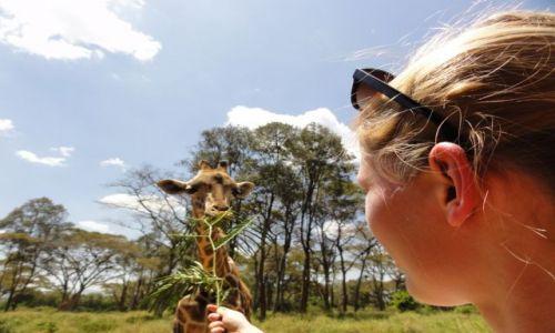 Zdjęcie KENIA / - / Nairobi / Centrum Żyraf Rotschilda
