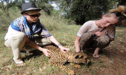 KENIA / - / Nairobi / kto mówił, że geparda nie da się oswoić? :)