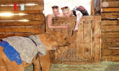 Zdjecie KENIA / - / Nairobi / w sirocińcu dla słoni