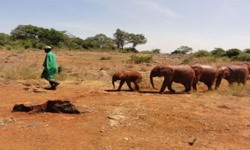 Zdjecie KENIA / - / Nairobi / uwaga, słonie na drodze!