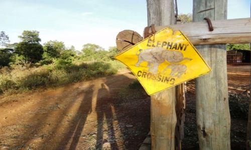 Zdjecie KENIA / - / Nairobi / kryć się, słonie!