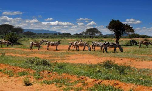 KENIA / Tsawo West / park narodowy / kenijskie safari