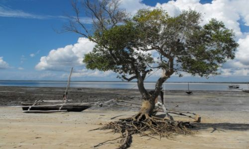 Zdjecie KENIA / wyspa Kinazini / wybrzeże / kenijskie wspomnienia
