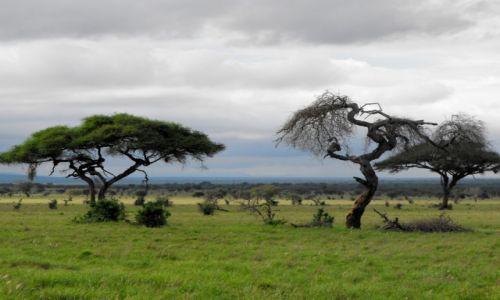Zdjecie KENIA / Tsawo East National Park / teren parku / kenijskie wspom
