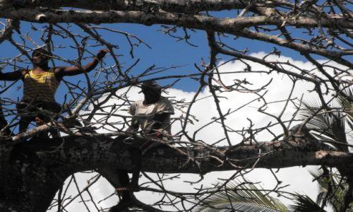 Zdjęcie KENIA / Diani / wybrzeże / siesta na baobabie