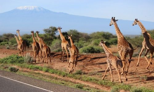 Zdjecie KENIA / -Amboseli National Park / -Amboseli National Park / Kilimanjaro:)
