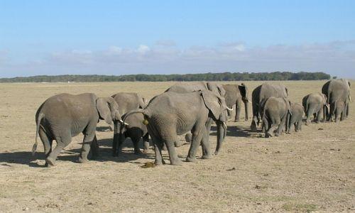 KENIA / . / P.N. Amboseli / mieszkańcy Amboseli
