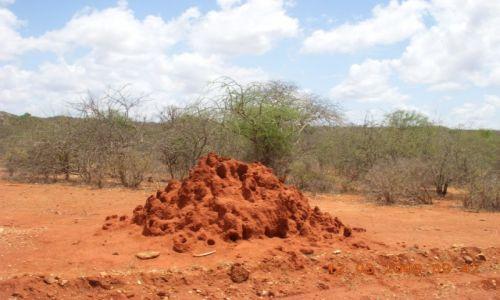 Zdjęcie KENIA / AMBOSELI / KENIA / Termitiera