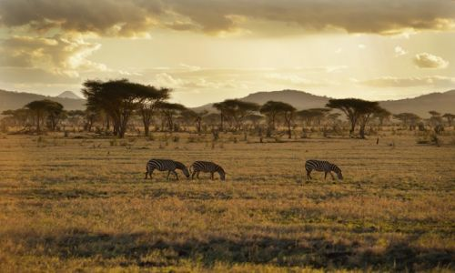 KENIA / - / Tsavo East / Out of Africa