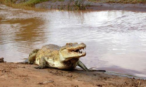 Zdjecie KENIA / Tsavo  / Kenia / Krokodyl z rzeki Galana