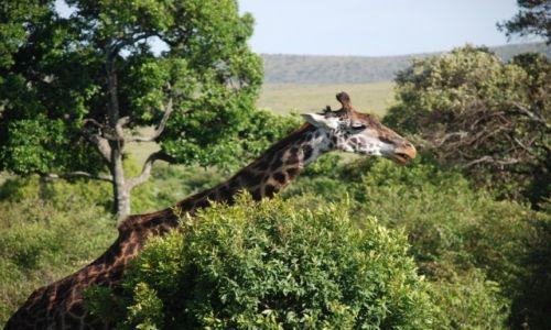Zdjecie KENIA / Rezerwat Massai Mara / Rezerwat Massai Mara / Konkurs Tam wrócę