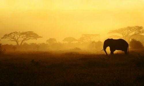Zdjecie KENIA / Przy granicy z Tanzanią / Park Narodowy Amboseli /