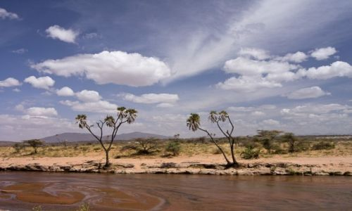 Zdjęcie KENIA / NP Samburu / NP Samburu / Kolory Afryki