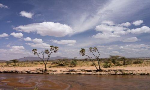Zdjecie KENIA / NP Samburu / NP Samburu / Kolory Afryki