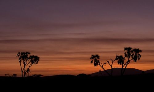 Zdjęcie KENIA / NP Samburu / NP Samburu / Nocne kolory Afryki