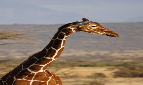 Zdjecie KENIA / NP Samburu / NP Samburu / Profil