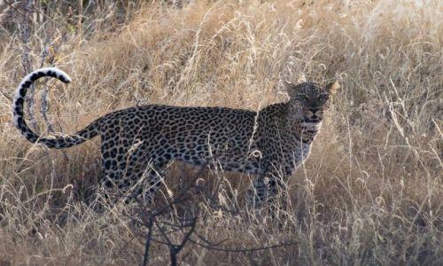 Zdjęcie KENIA / NP Masai Mara / NP Masai Mara / Kociak