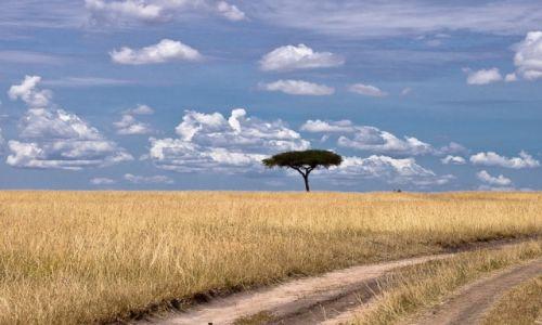 Zdjęcie KENIA / NP Masai Mara / NP Masai Mara / Samotne drzewo