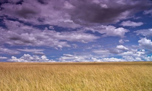 Zdjęcie KENIA / NP Masai Mara / NP Masai Mara / Bezkres