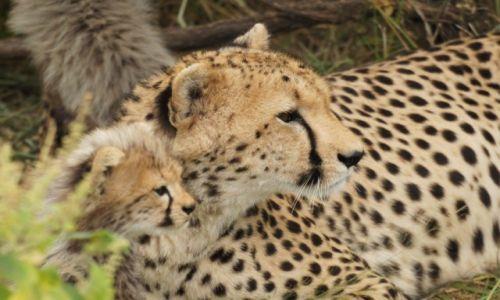 KENIA / west / tsavo / Safari
