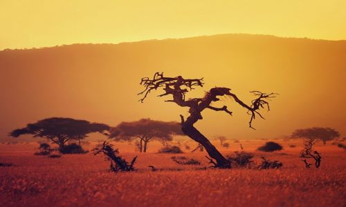 Zdjęcie KENIA / Tsavo West / Tsavo West / Tsavo West