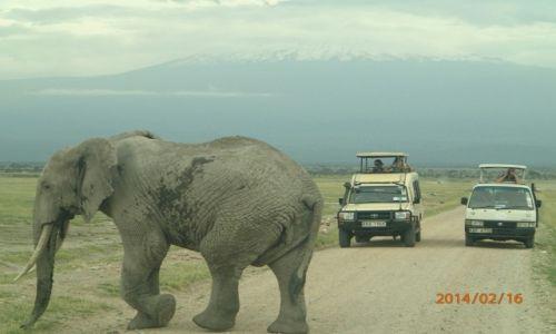 Zdjecie KENIA / -Amboseli / Tsavo/Amboseli/Diani  / ....moja kenia...
