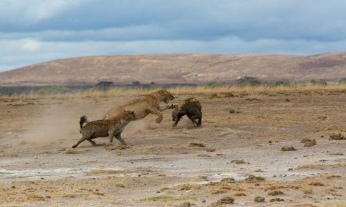 Zdjecie KENIA / Kenia / Park Amboseli / Safari