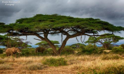Zdjęcie KENIA / Kenia / Park Amboseli / Krajobraz Amboseli