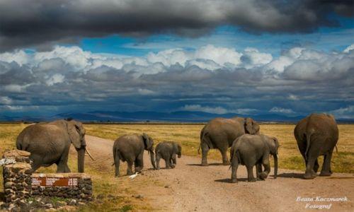 KENIA / Kenia / Park Amboseli / Słonie...no i sobie poszły...