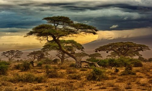 KENIA / Kenia / Park Amboseli / Krajobraz Amboseli
