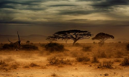 Zdjecie KENIA / Kenia / Park Amboseli / Amboseli