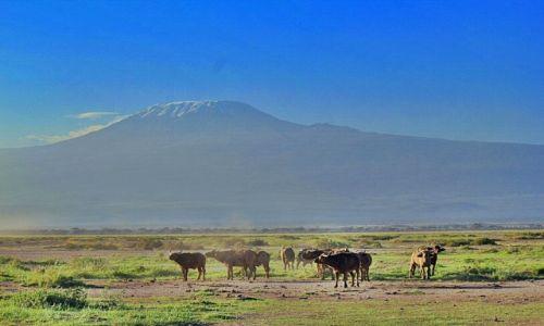 Zdjecie KENIA / Park Narodowy / jw / Kilimandżaro o świcie