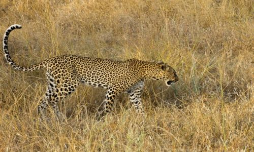 Zdjęcie KENIA / NP Masai Mara / NP Masai Mara / Słodziak