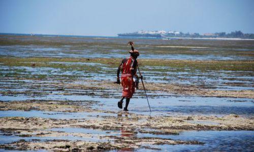 Zdjecie KENIA / Wybrzeże / Wybrzeże / Spacer Masaja podczas odpływu