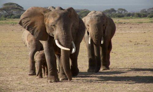 Zdjęcie KENIA / Mombasa / Amboseli / nie ma jak rodzinka