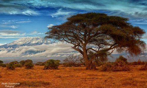 Zdjecie KENIA / Kenia / Park Amboseli / Krajobraz Kenii
