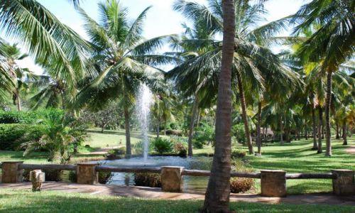Zdjęcie KENIA / Okolice Mombasy / Teren przy hotelu Shanzu Palm i Coral Beach / Krajobraz