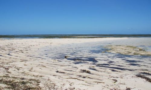 Zdjęcie KENIA / Wybrzeże / okolice Mombasy / Plaża po odpływie