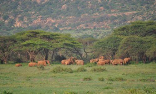 Zdjecie KENIA / Mombasa / Tsawo West / Safari