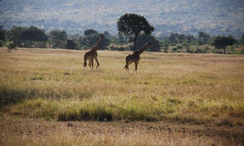 Zdjęcie KENIA / Masai Mara / SAFARI / SAFARI