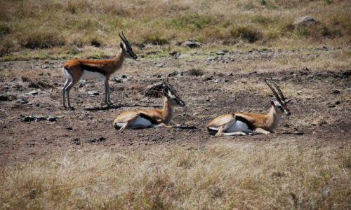 Zdjęcie KENIA / Masai Mara / SAFARI / Zwierzyna na safari