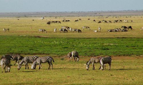 Zdjęcie KENIA / płd Kenia / Amboseli / Safari