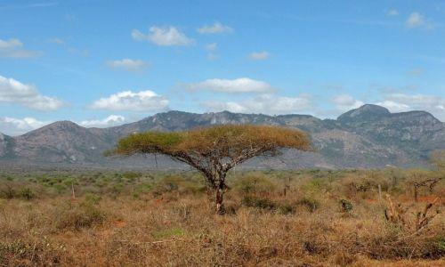 Zdjecie KENIA / płd Kenia / Tsavo West / Kenijski widoczek