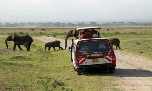 Zdjęcie KENIA / płd Kenia / Amboseli / Przejscie dla pieszych