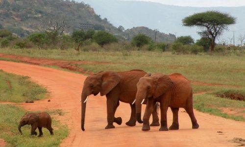 Zdjęcie KENIA / płd Kenia / Tsavo East / Rodzinka