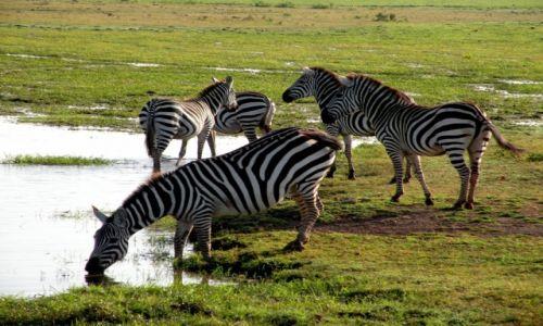 Zdjęcie KENIA / płd Kenia / Amboeli / Zebry