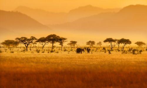 Zdjecie KENIA / Mombasa / Tsavo East National Park / Jurassic Park I
