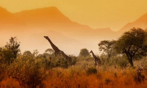 Zdjecie KENIA / Mombasa / Tsavo East National Park  / Jurassic Park