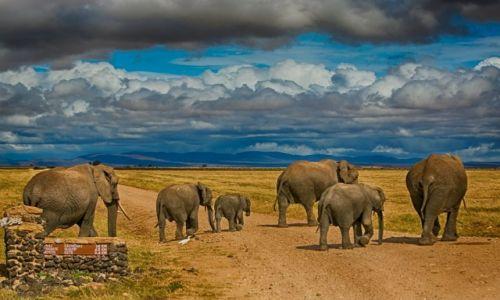 Zdjęcie KENIA / Park Amboseli / Park Amboseli / Słonie w Amboseli